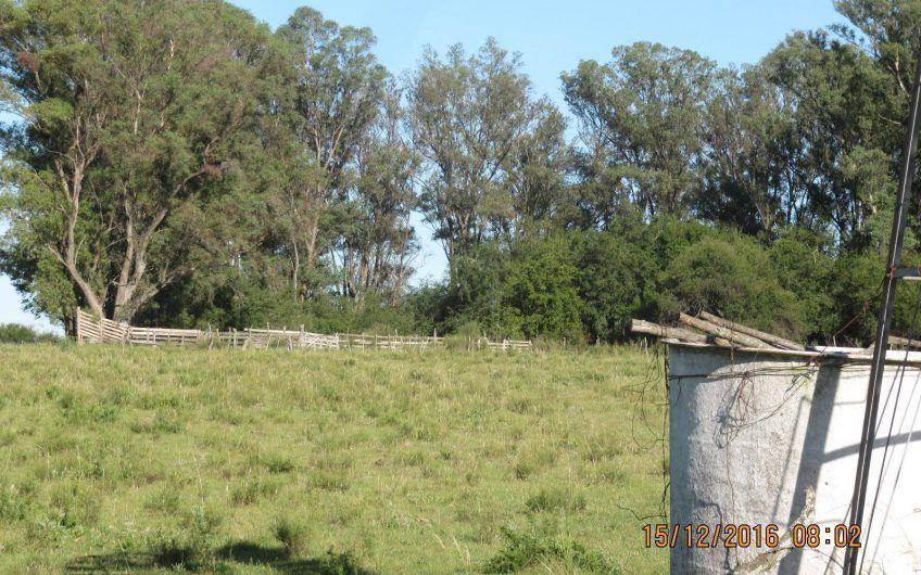 Campo agrícola-ganadero